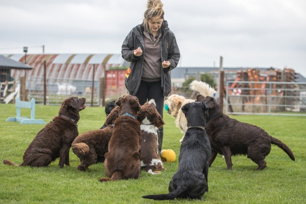 Eight dogs sitting and paying attention to female team member talking to them and holding treats.