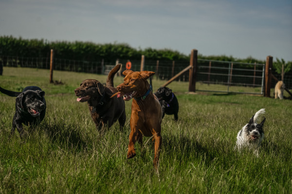 Five different breed dogs happily running through a field towards the camera